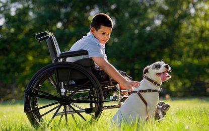La place des animaux auprès des personnes handicapées