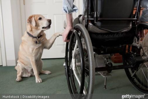 chien à côté d'une personne en fauteuil roulant