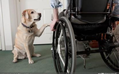Le chien d'assistance : une aide technique au quotidien