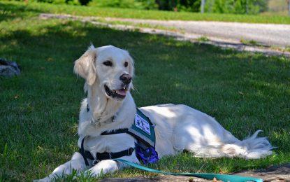 Quel chien pour les personnes en situation de handicap ?
